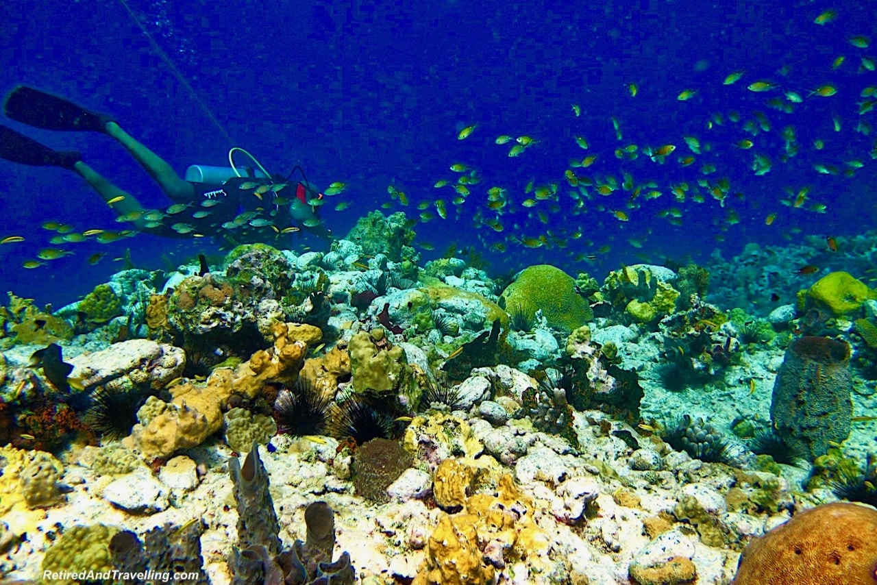 Sandals Dive Master in St Lucia - Scuba Dive Under The Pitons In St. Lucia.jpg