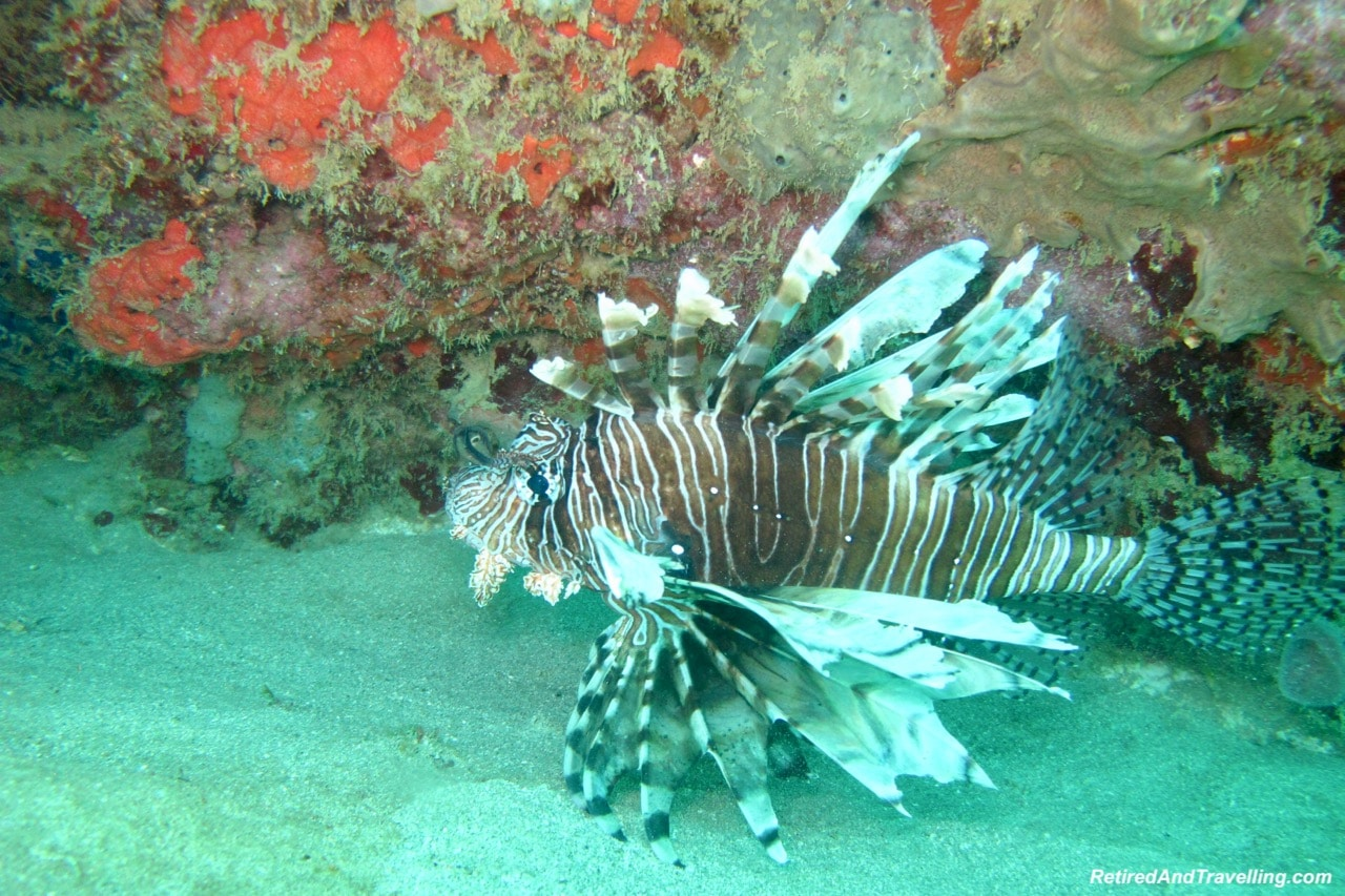 Lion Fish- Scuba Dive Under The Pitons In St. Lucia.jpg