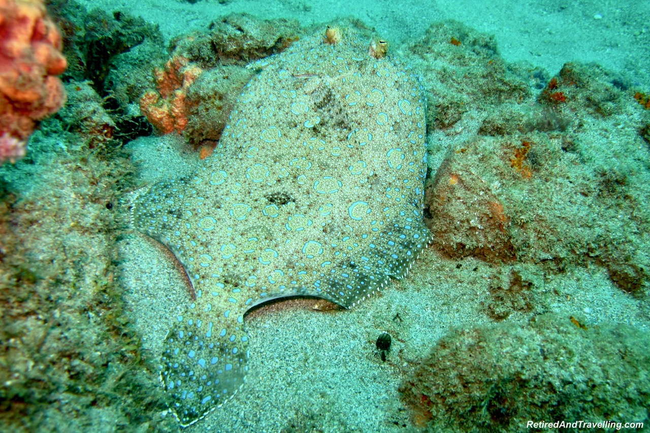 Spotted Flounder Fish- Scuba Dive Under The Pitons In St. Lucia.jpg