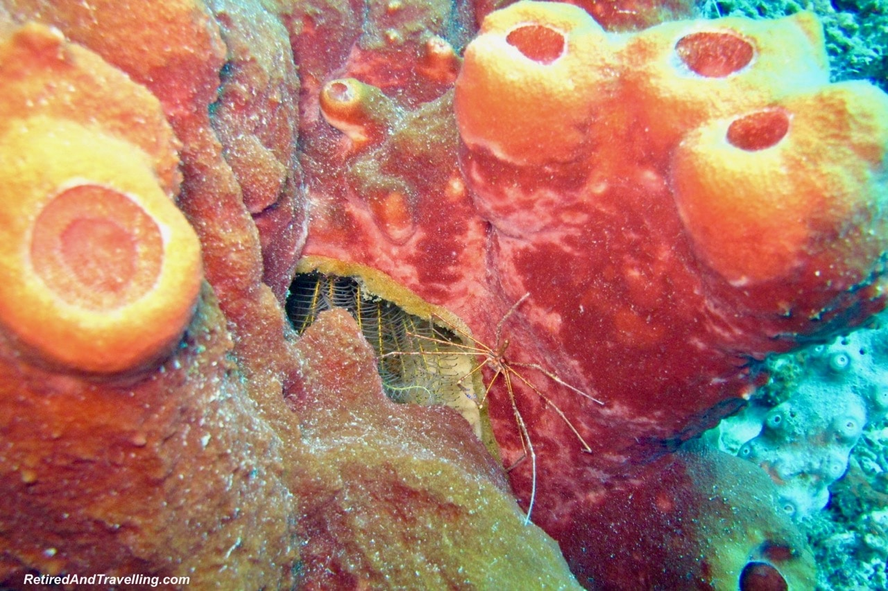 Colourful Coral - Scuba Dive Under The Pitons In St. Lucia.jpg