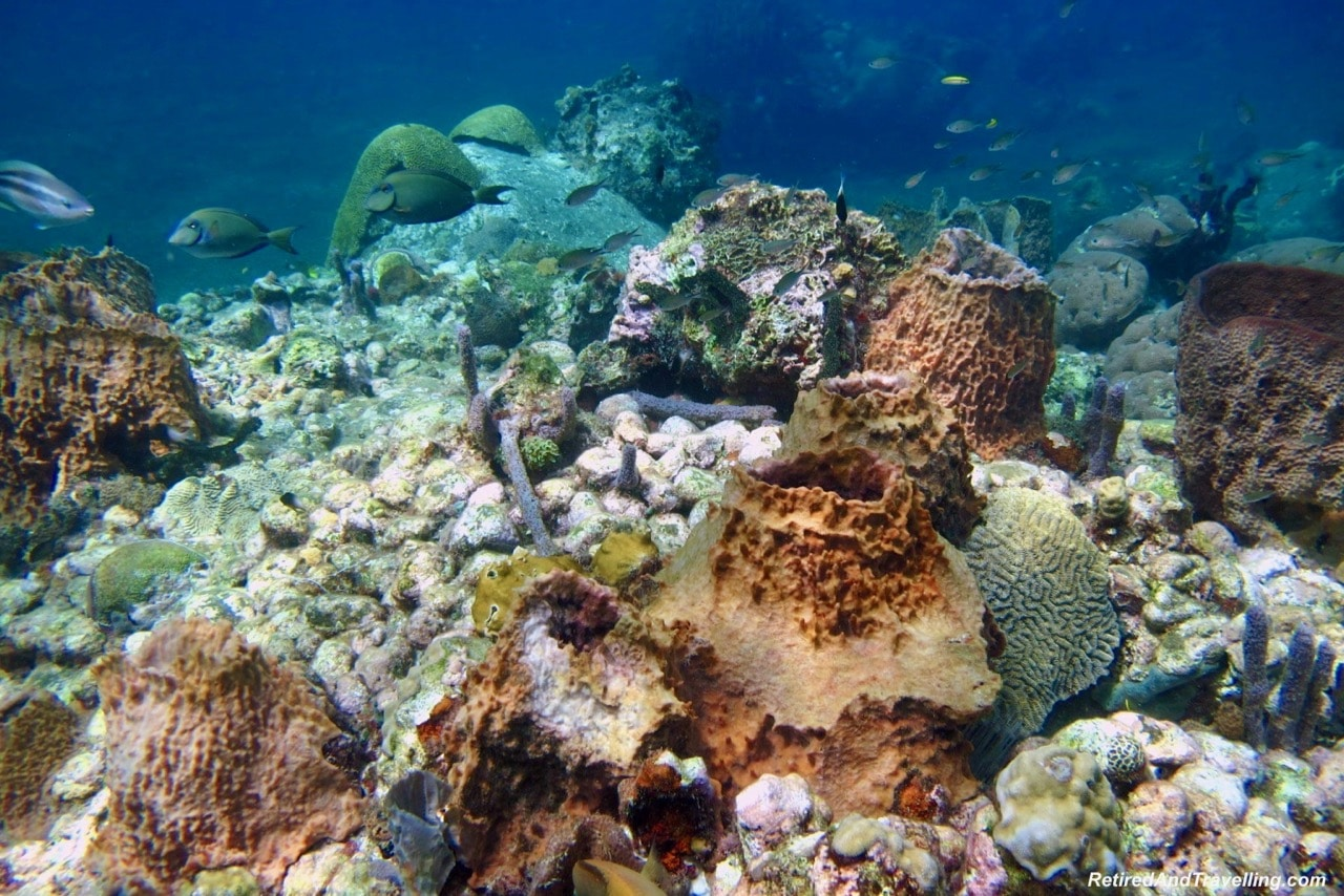 Interesting Fields of Coral - Scuba Dive Under The Pitons In St. Lucia.jpg