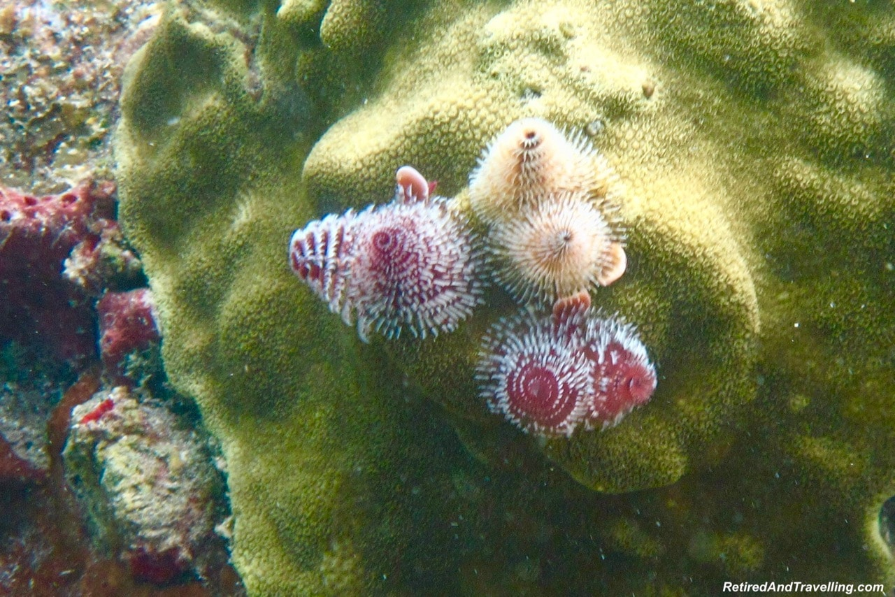 Snorkelling Bequia Island