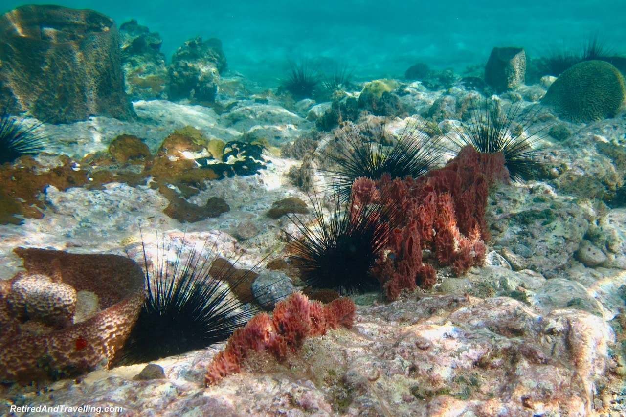 Snorkel Bequia Island St Vincent - Cruise To The Southern Caribbean.jpg