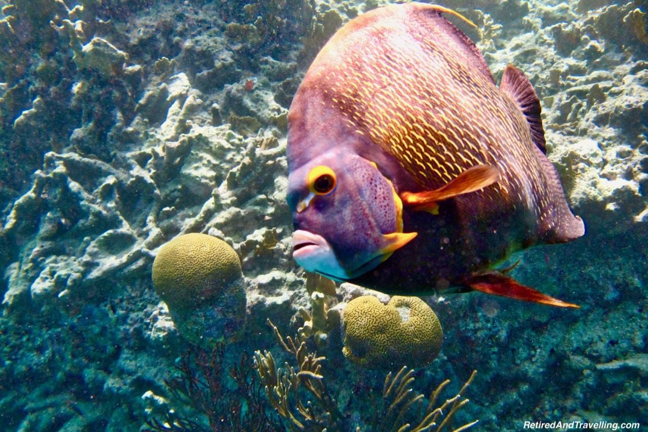 Snorkel Klein Bonaire - Cruise To The Southern Caribbean.jpg