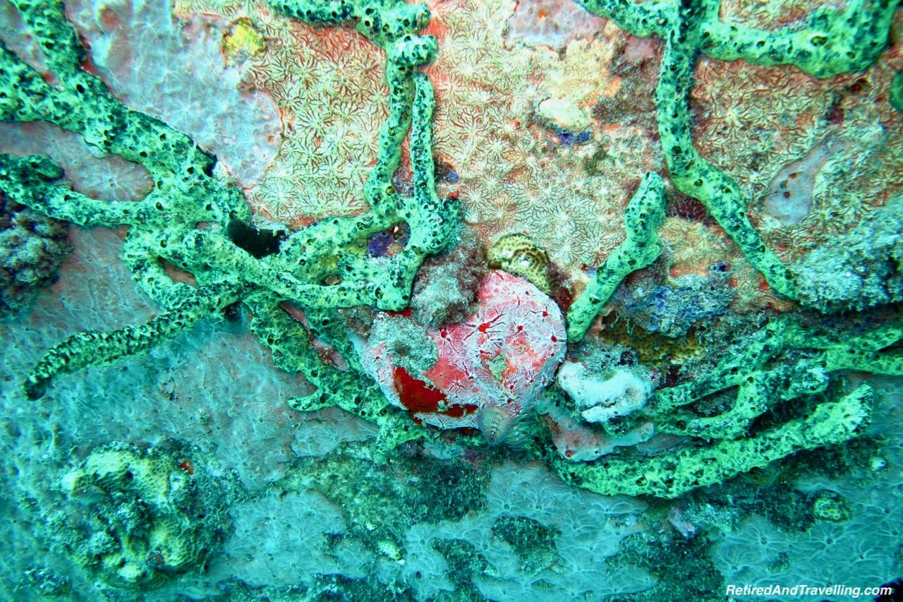 Colourful Coral - Scuba Diving in Grenada.jpg