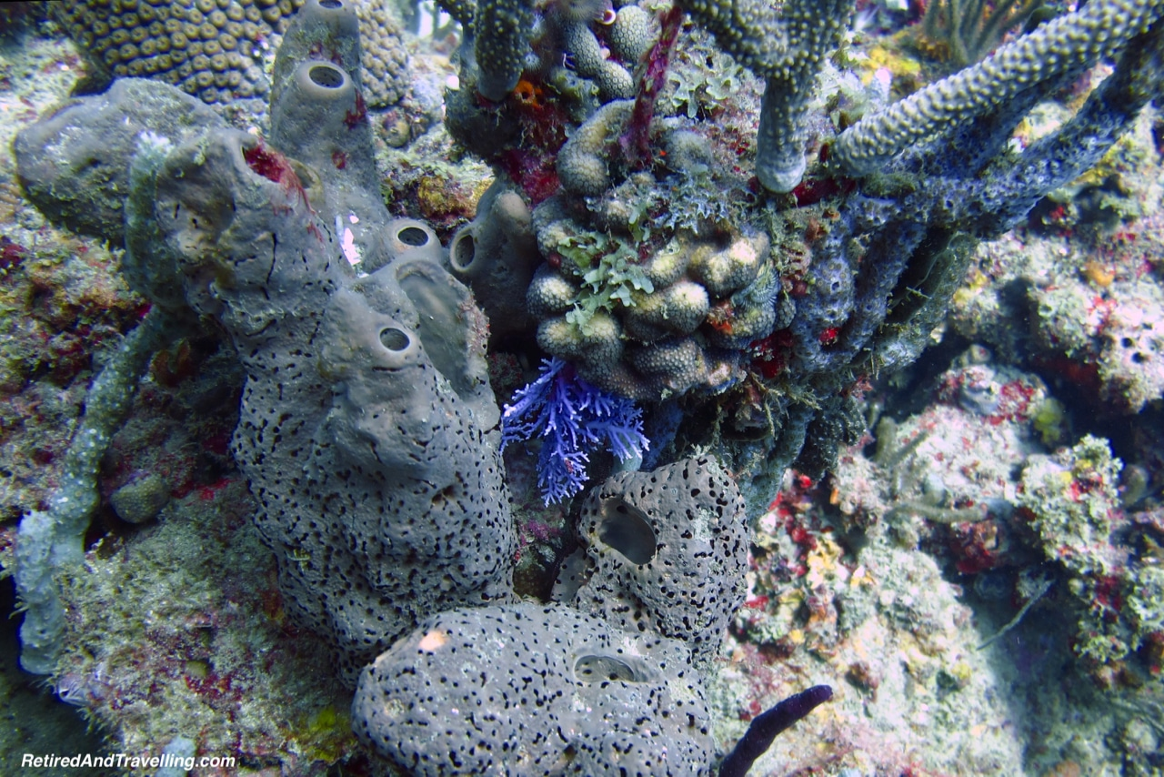 Colourful Coral - Scuba Diving in Grenada.jpg