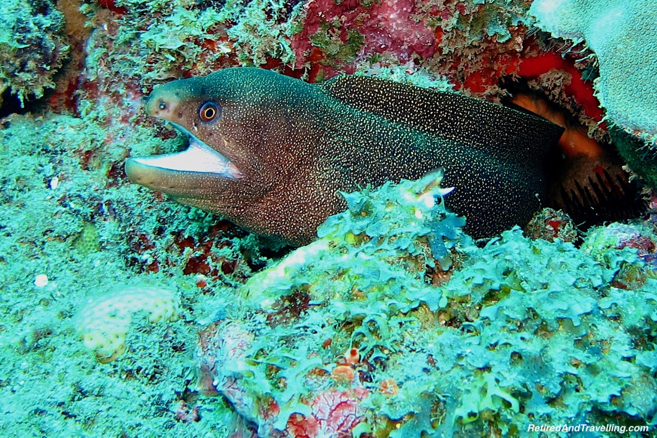 Black Spotted Moray Eel - Scuba Diving in Grenada.jpg