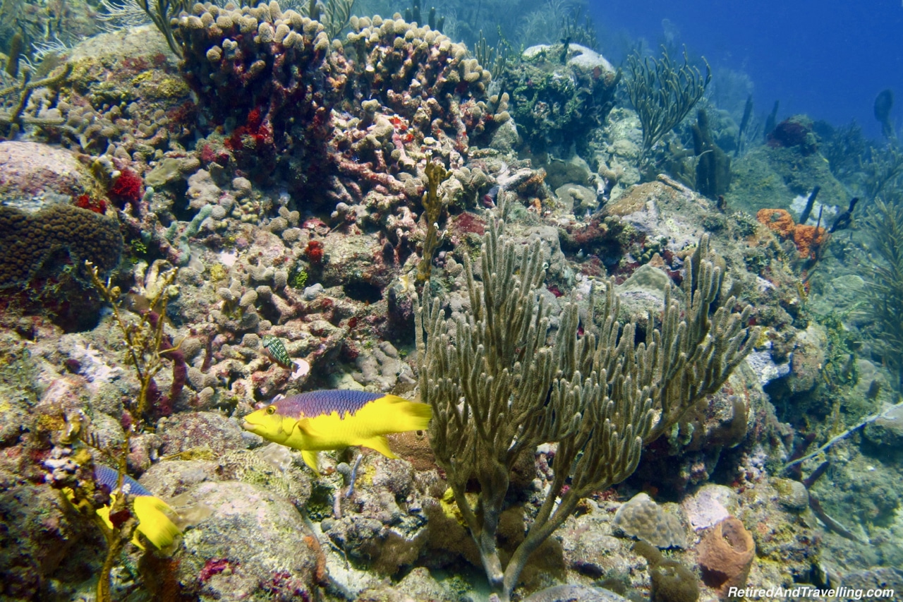 Colourful Fish - Scuba Diving in Grenada.jpg