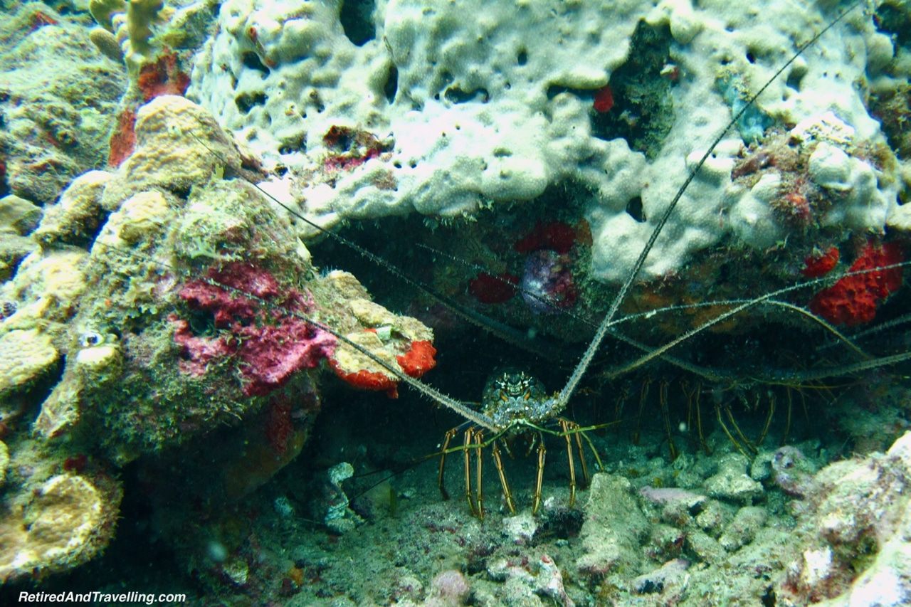 Lobsters - Scuba Diving in Grenada.jpg