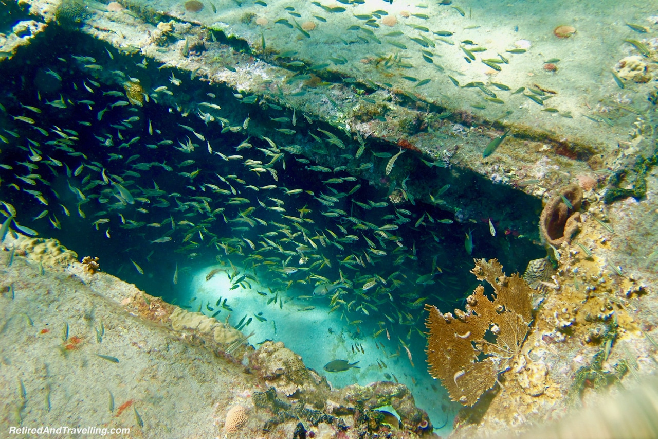 School of Fish in Wreck - Scuba Diving in Grenada.jpg