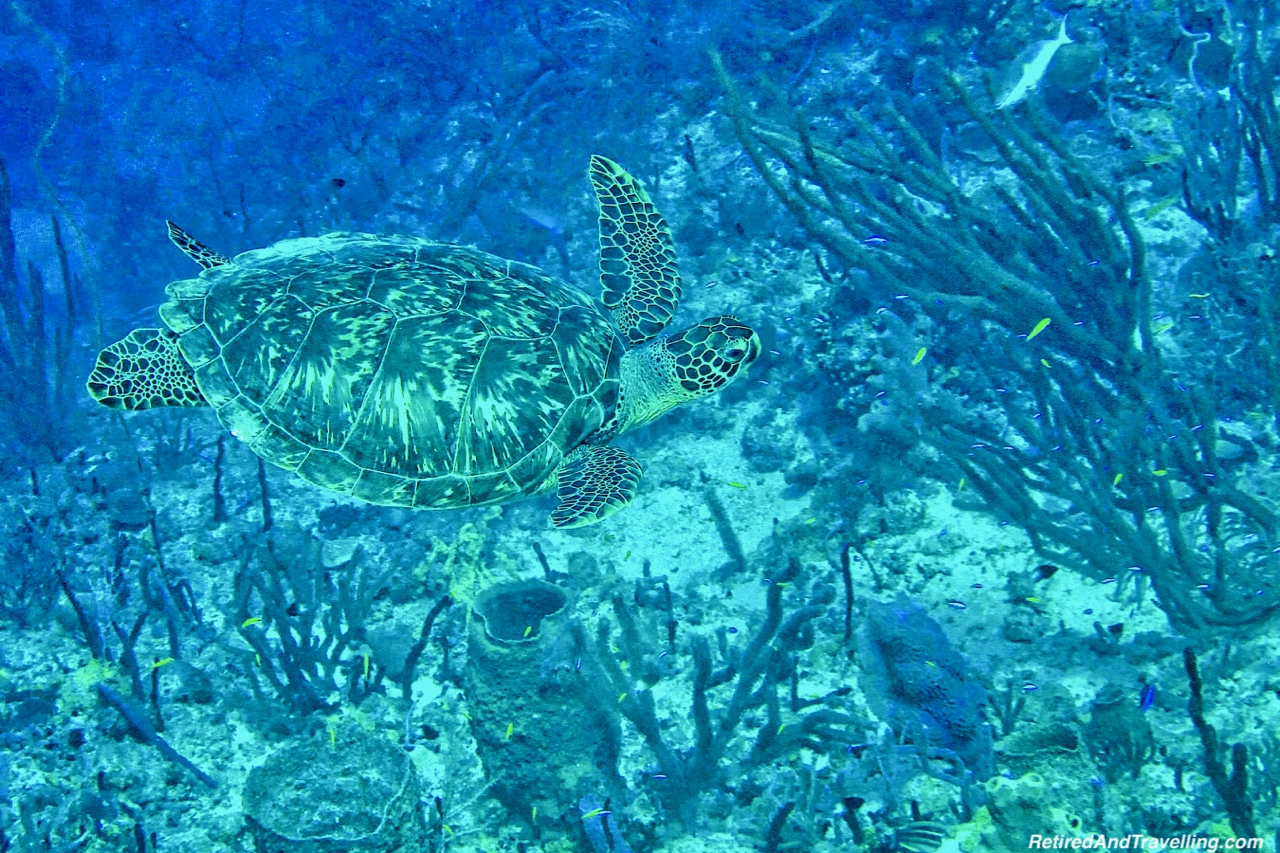 Turtles - Scuba Diving in Grenada.jpg