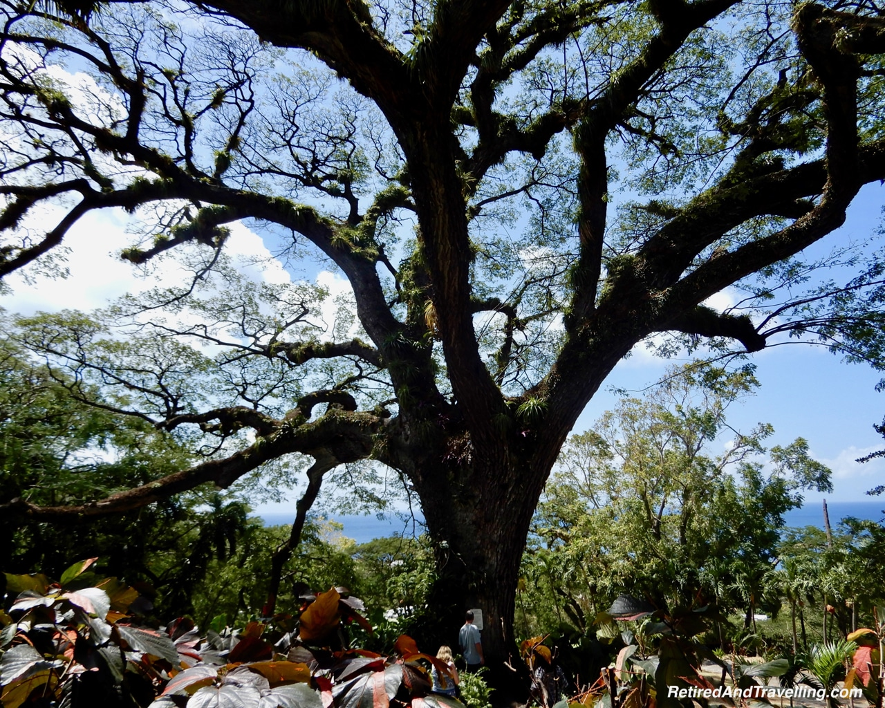 Oldest Tree Grounds Wingfield Estates Cane Processing - Zipline Ride In St Kitts.jpg