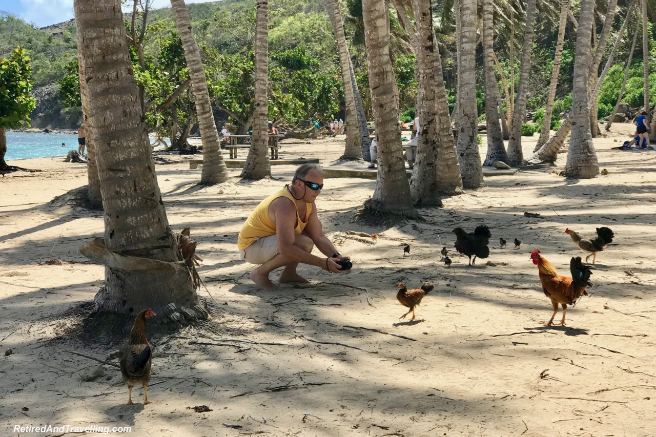 Guadaloupe Terre de Haute Les Saintes Pompierre Beach Chickens - Cruising With Windstar In The Caribbean.jpg