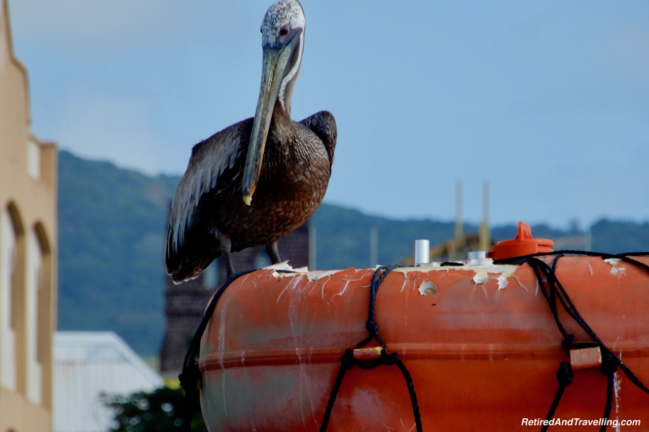 St Kitts Harbour Pelican - Zipline Ride In St Kitts.jpg