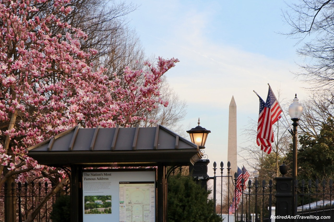 Blossom at Washington Monument - Experience Cherry Blossoms In Washington DC.jpg