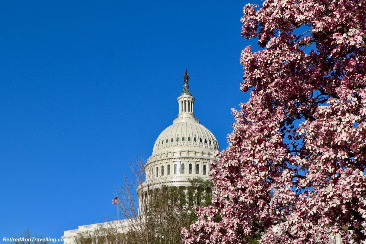 Blossom at Capital Building - Experience Cherry Blossoms In Washington DC.jpg