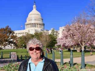 Experience Cherry Blossoms In Washington DC.jpg