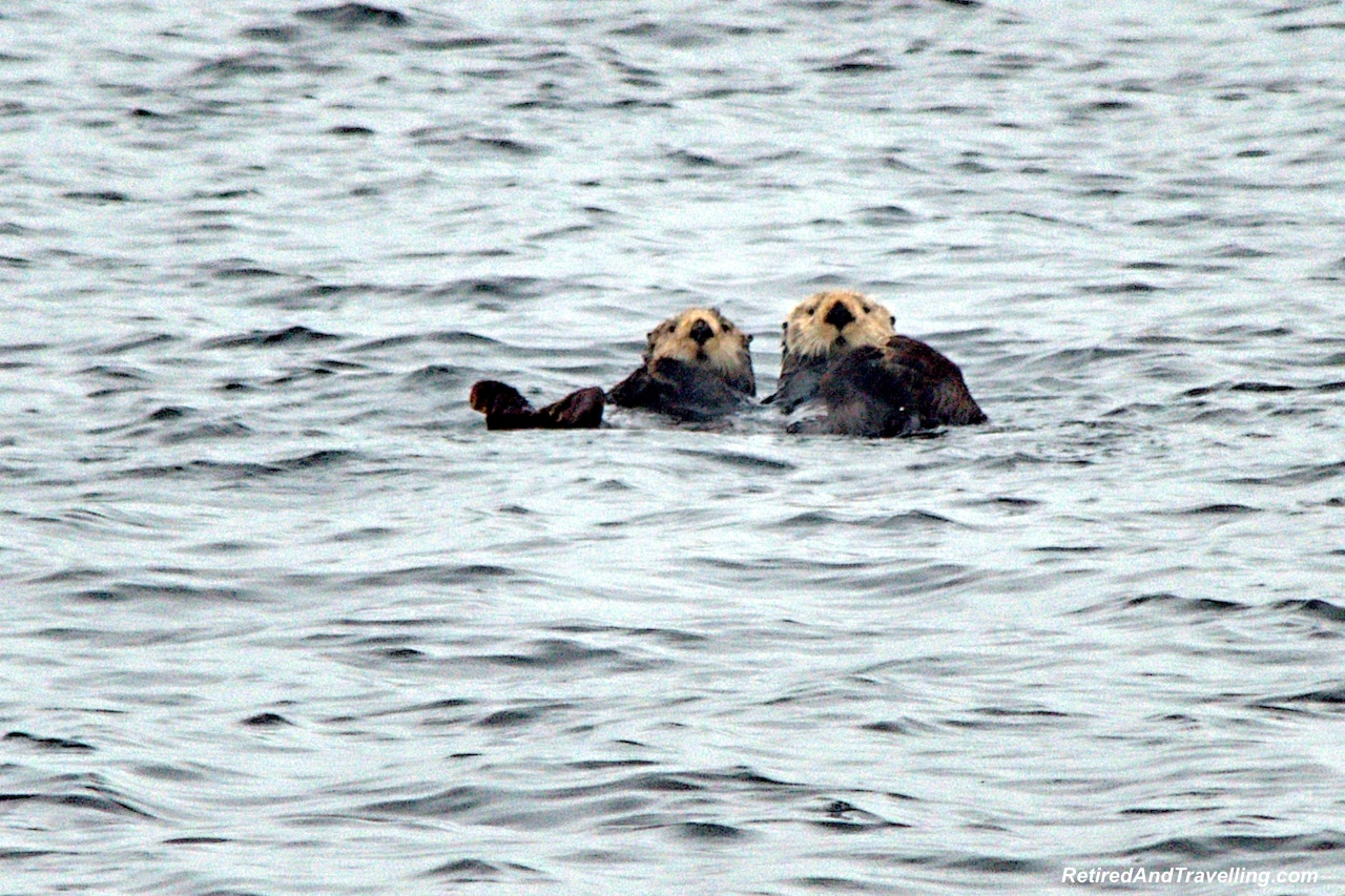 You May See Sea Otters - Planning An Alaska Cruise.jpg