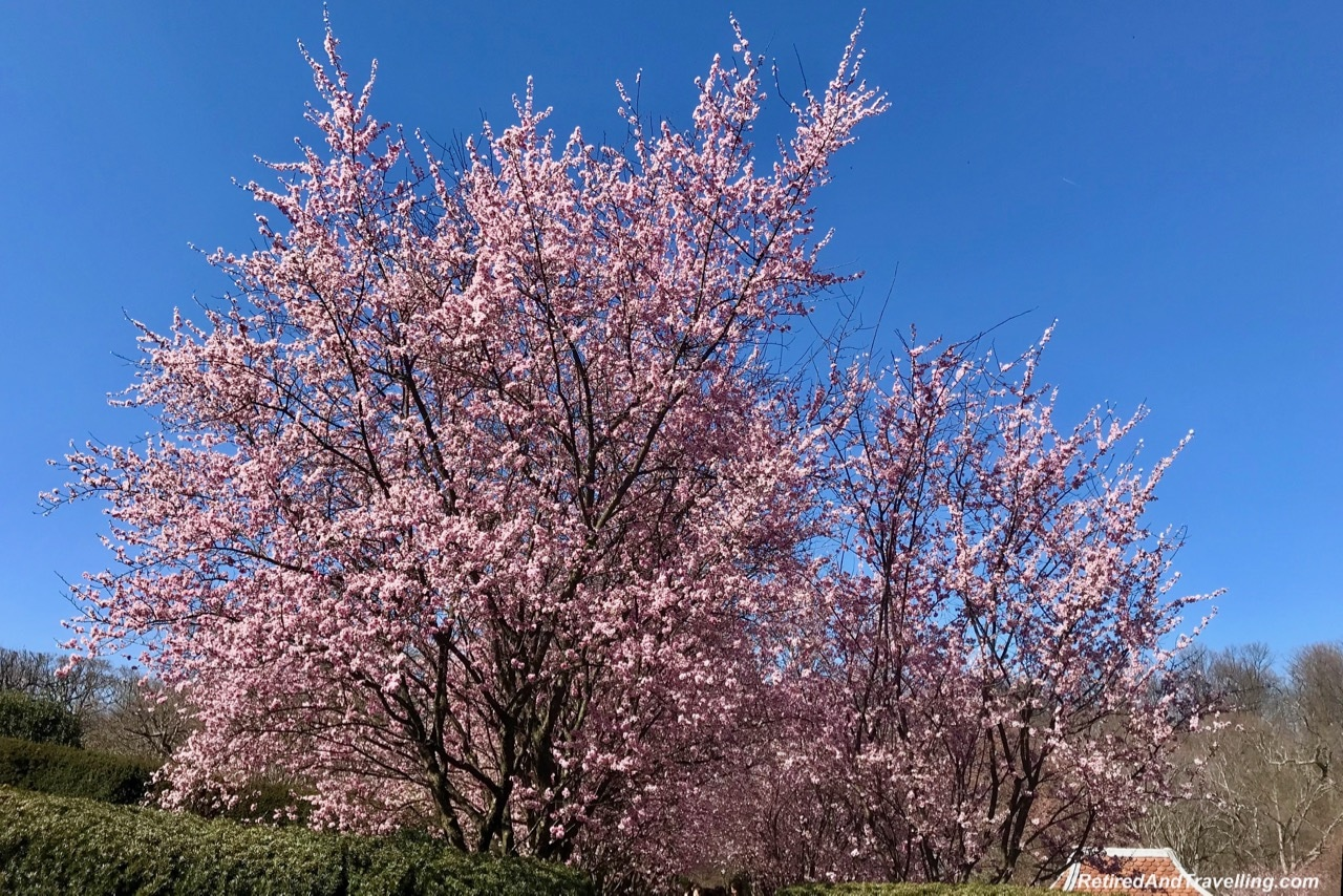 Dumbarton Oak Gardens Japanese Plum Blossoms - Experience Cherry Blossoms In Washington DC.jpg