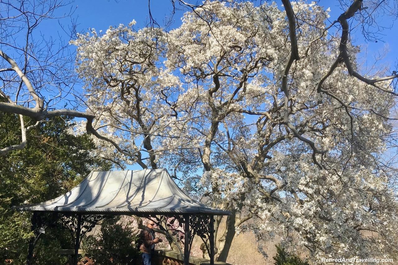 Dumbarton Oaks Gardens Cherry Blossoms - Things To Do In Washington DC.jpg