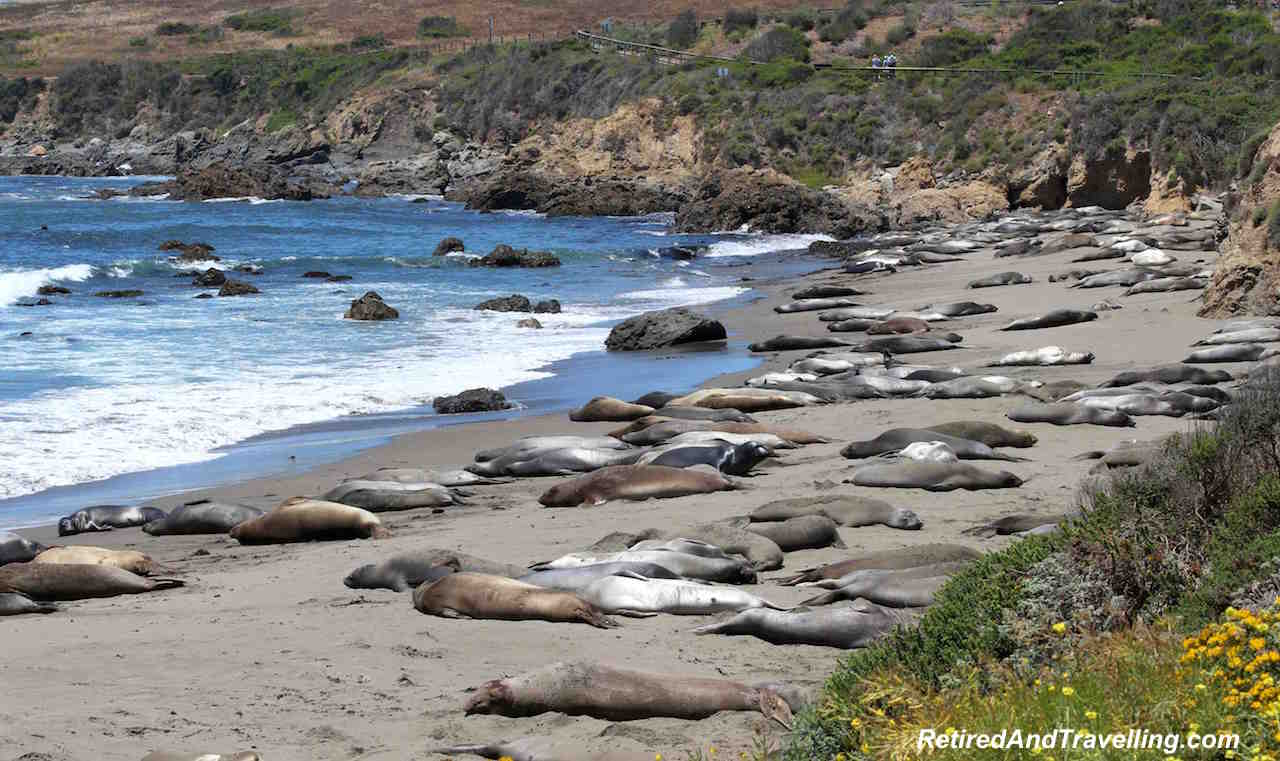 Elephant Seals On Beach - West Coast Itinerary.jpg