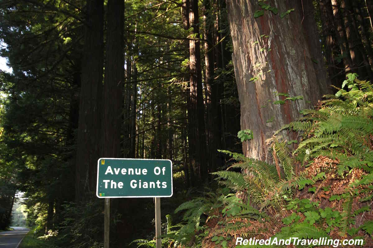 Redwoods - Avenue of the Giants - West Coast Itinerary.jpg