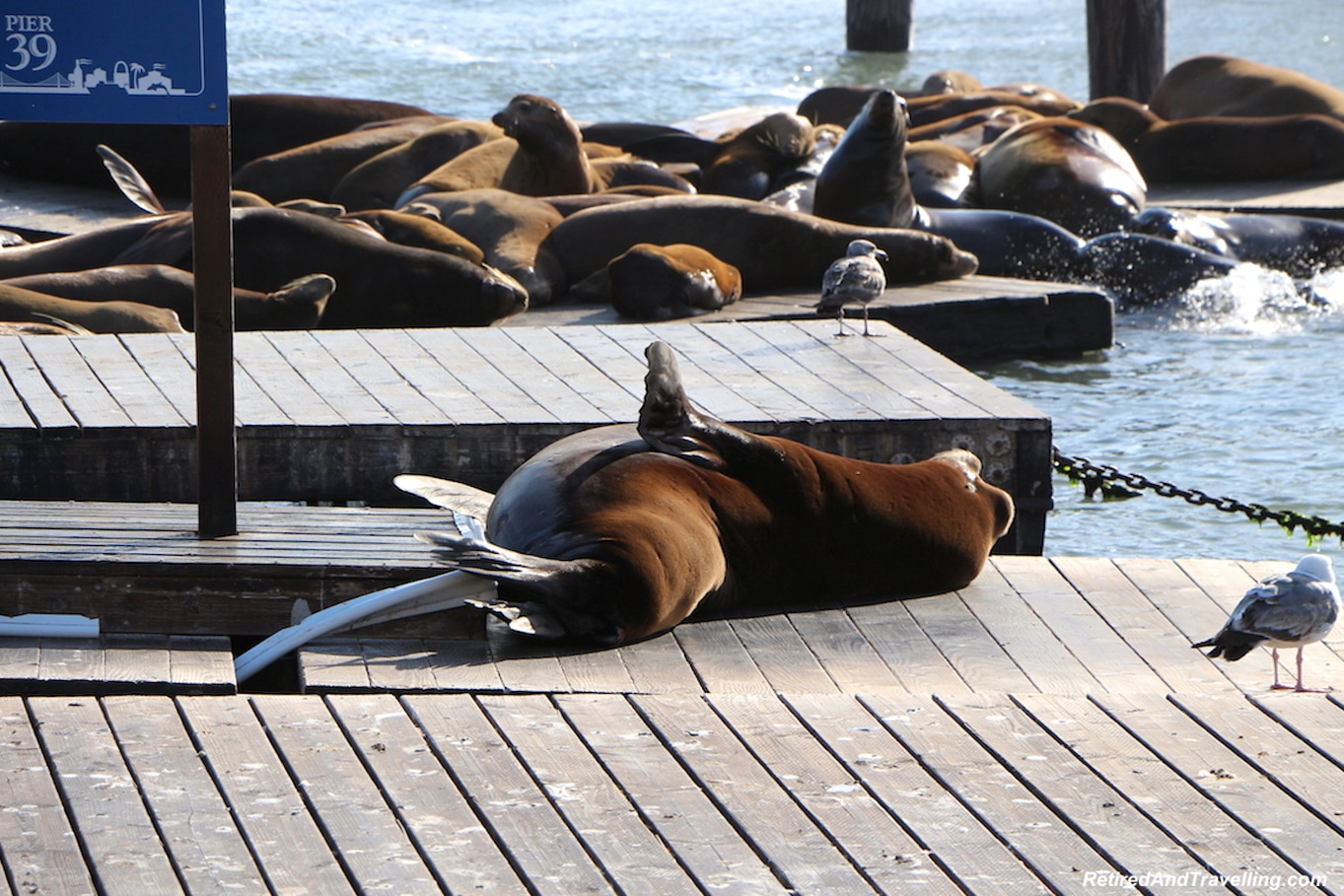 San Francisco Pier 39 Seals - West Coast Itinerary.jpg