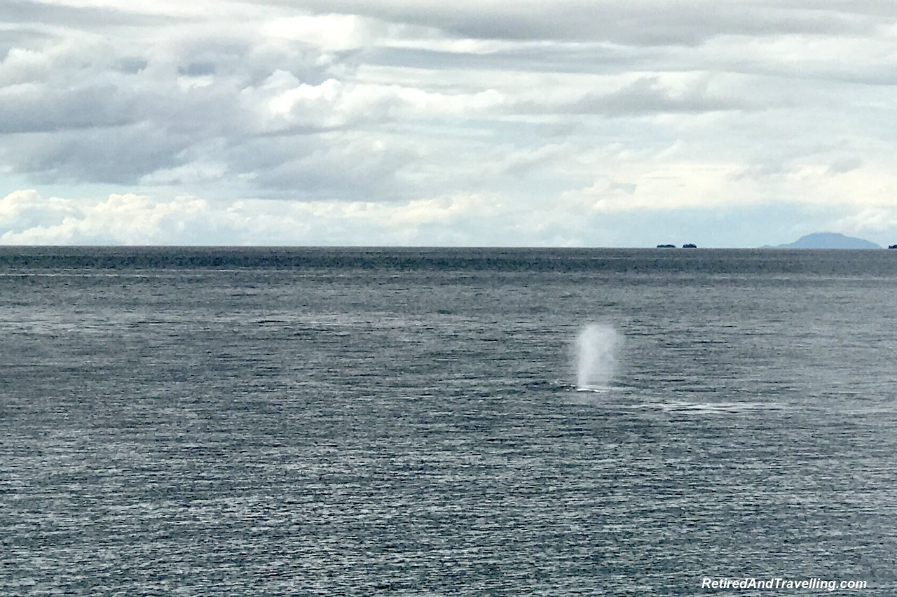 You May See Whales - Planning An Alaska Cruise.jpg