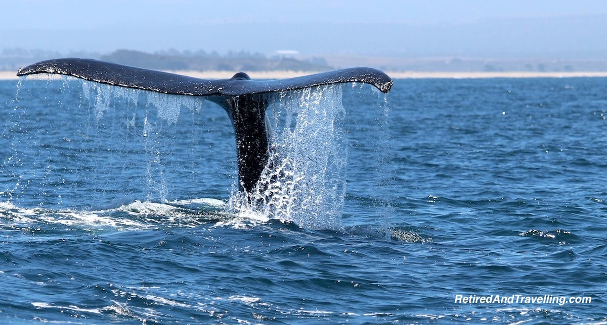 Monterrey Whale Watching - West Coast Itinerary.jpg