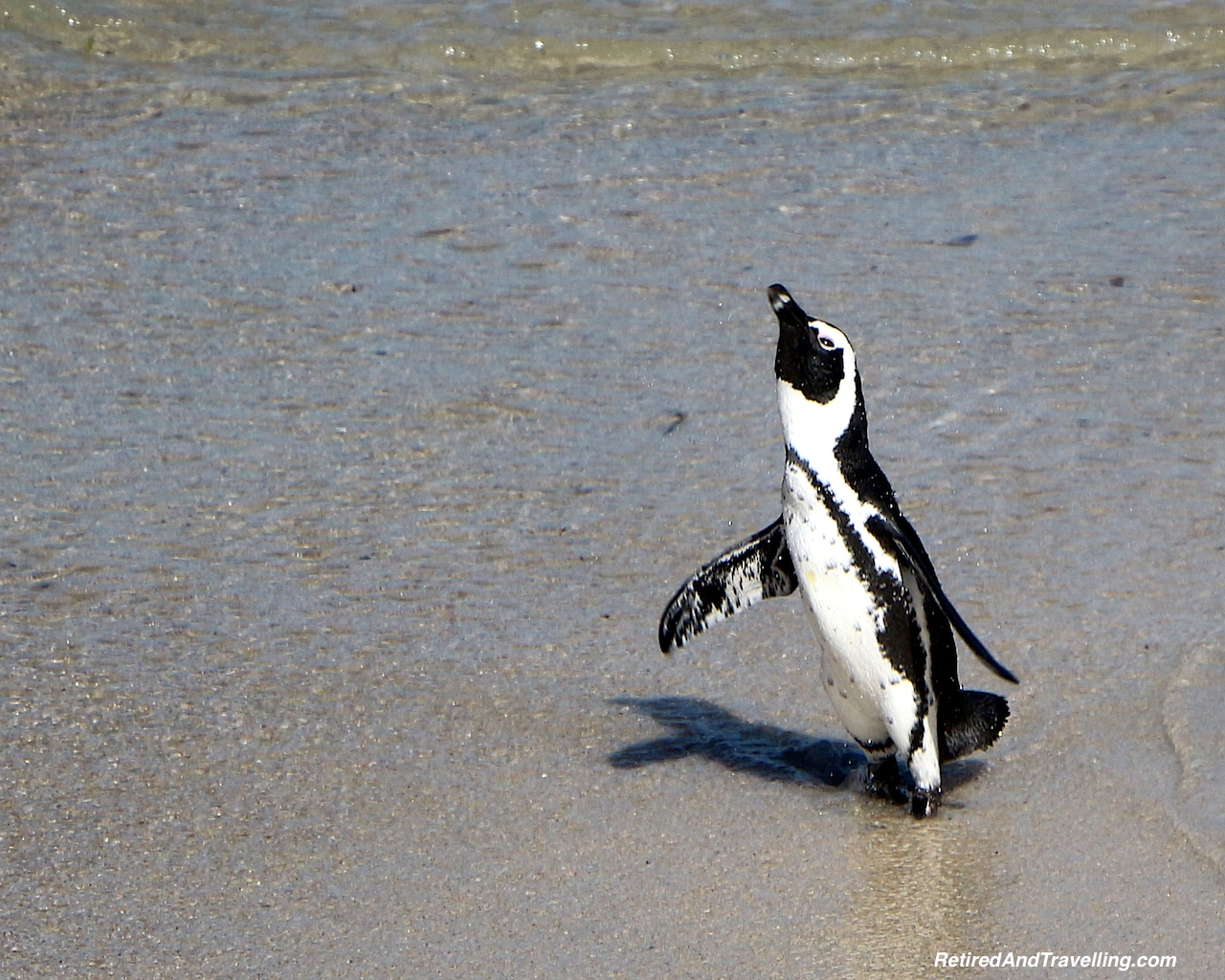 Penguin South Africa - Hot Spots In The Winter.jpg