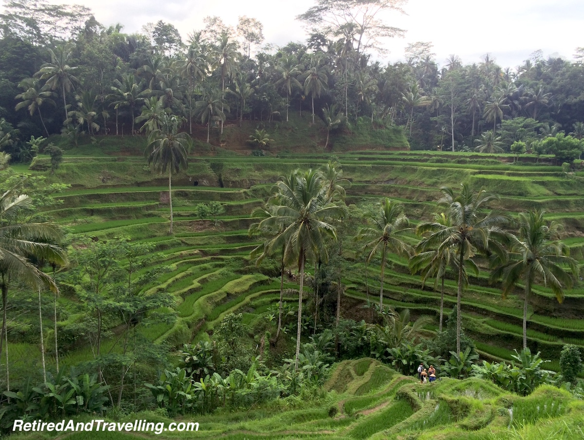 Ubud Rice Terrace View Bali SE Asia - Hot Spots In The Winter.jpg