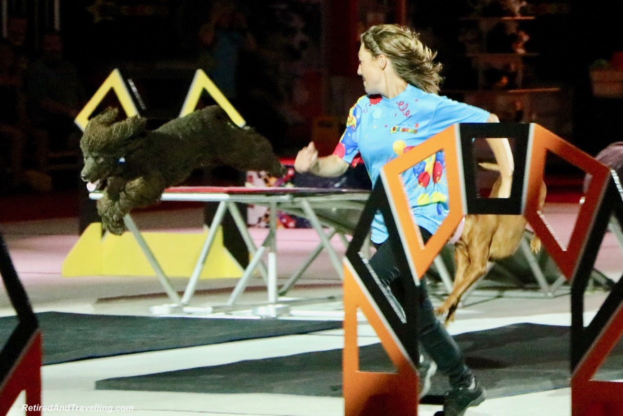 Super Dogs Show - Things To Do At The Toronto CNE.jpg