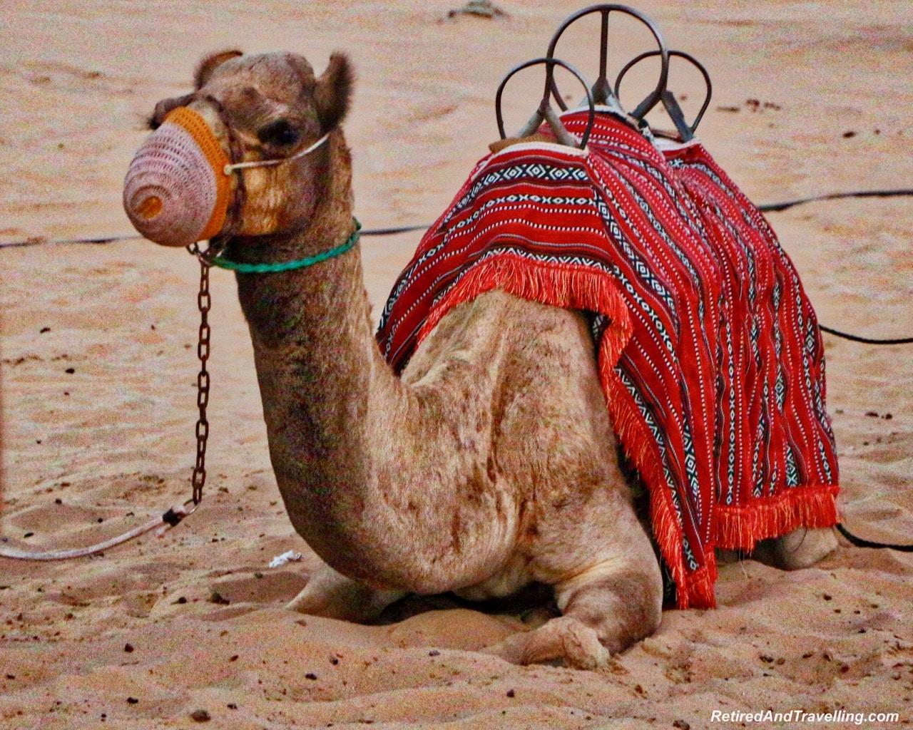 Desert Camel Ride - Tips For Visiting Dubai.jpg