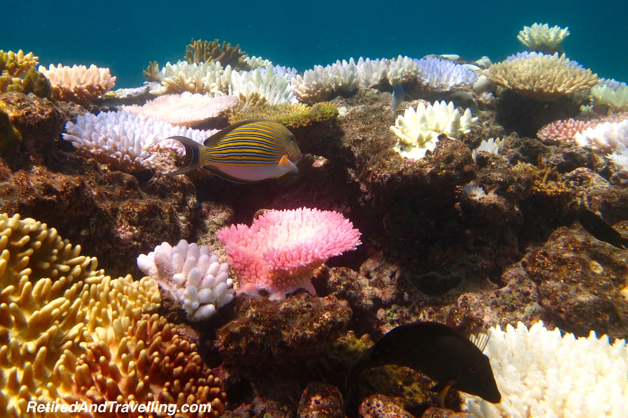 Australia Great Barrier Reef Scuba Dive - Favourite Travel Blog Posts RetiredAndTravelling.jpg