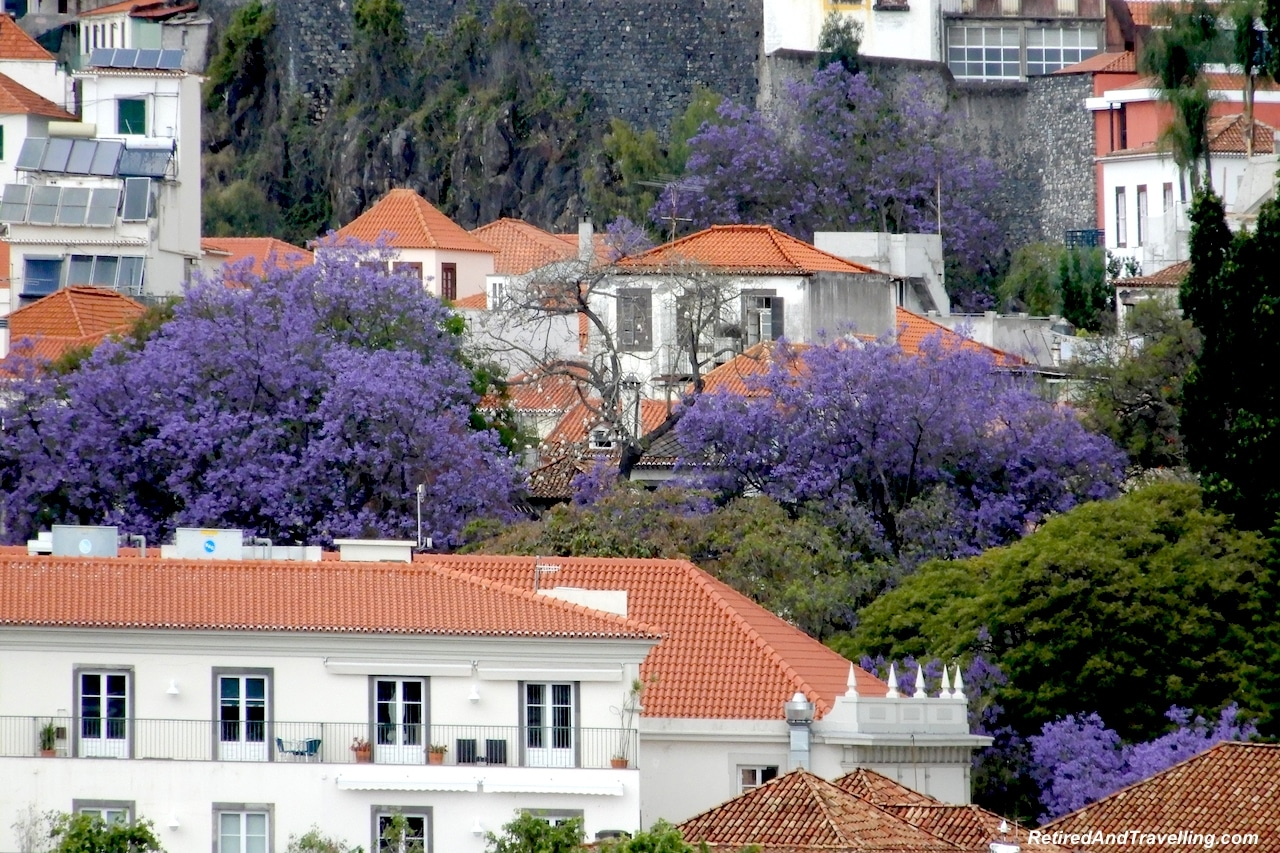 Jacaranda Trees Funchal Madeira - 4 Weeks In Portugal.jpg