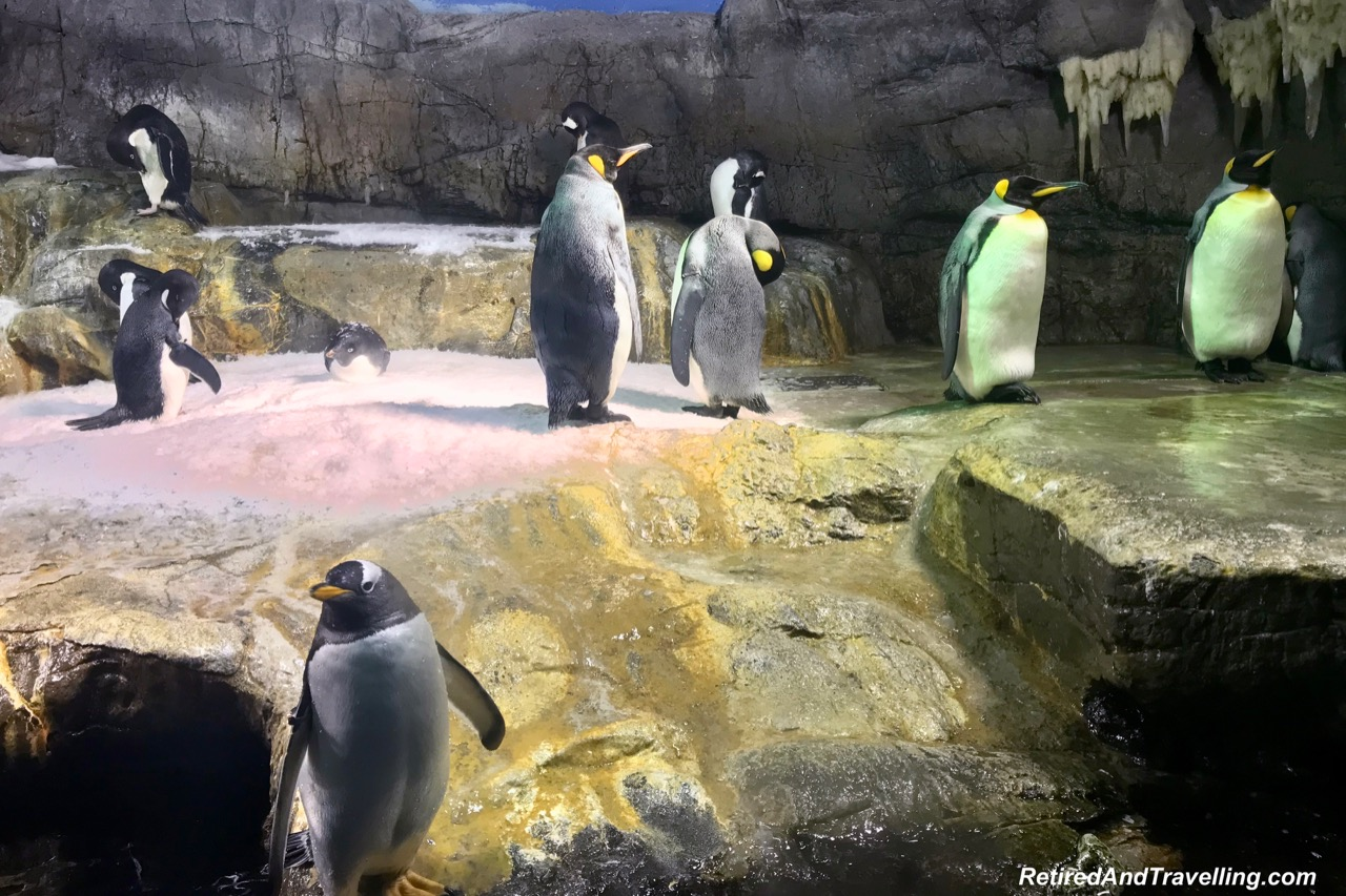 Antarctic King Penguins - Whale Sharks at the Osaka Kaiyukan Aquarium.jpg