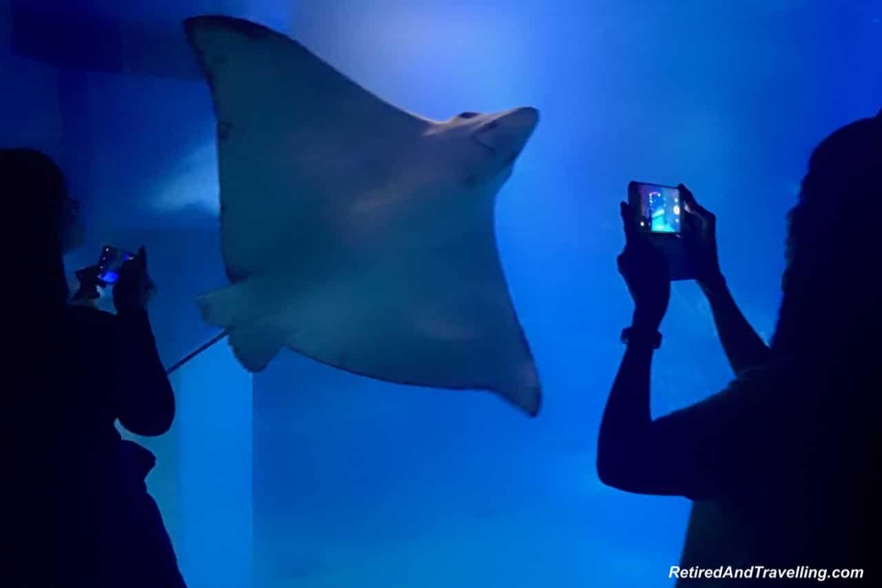 Spotted Eagle Ray - Whale Sharks at the Osaka Kaiyukan Aquarium.jpg
