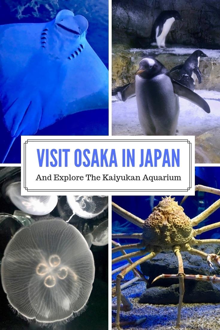 Whale Sharks At The Osaka Kaiyukan Aquarium