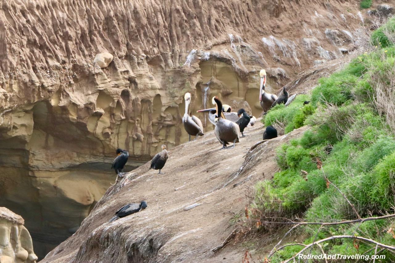 La Jolla Cove Sea Birds - Stay In San Diego.jpg