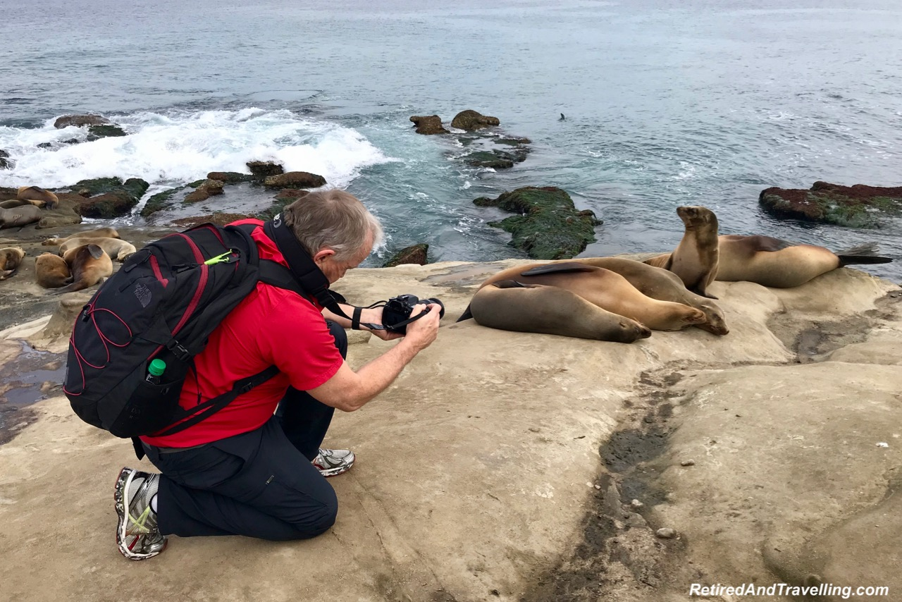 La Jolla Cove Sea Lions - Stay In San Diego.jpg