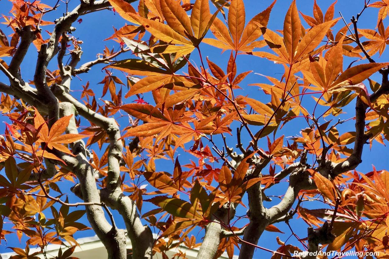 Fall Leaves Daishoin Temple.jpg