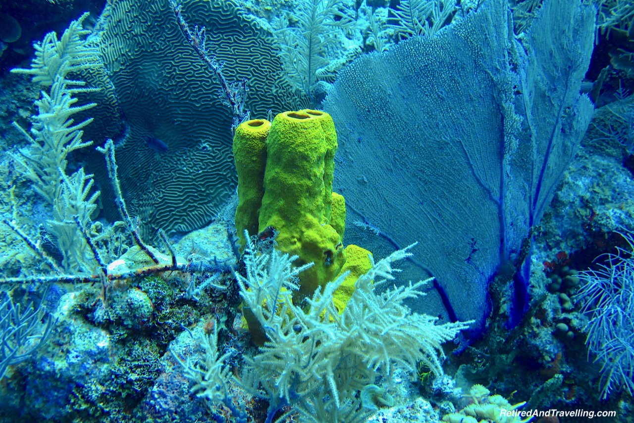 Scuba Dive - Things To Do In Grand Cayman.jpg