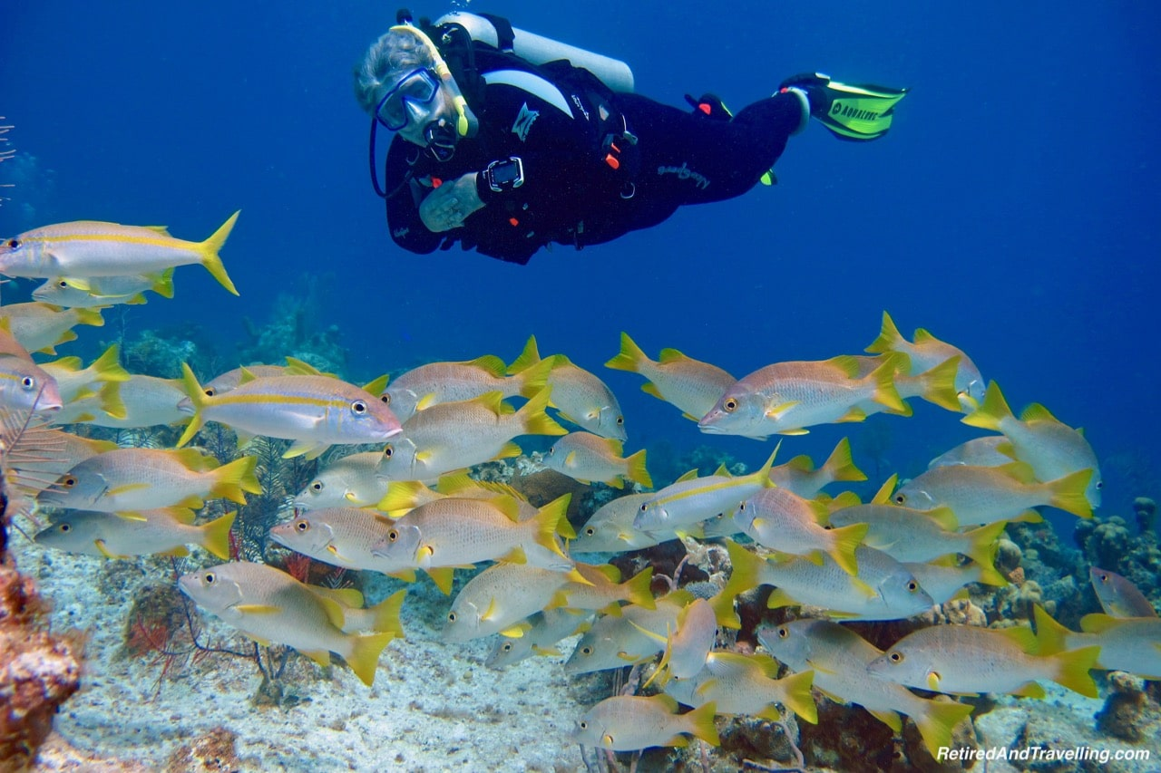 Fish Schools.jpg