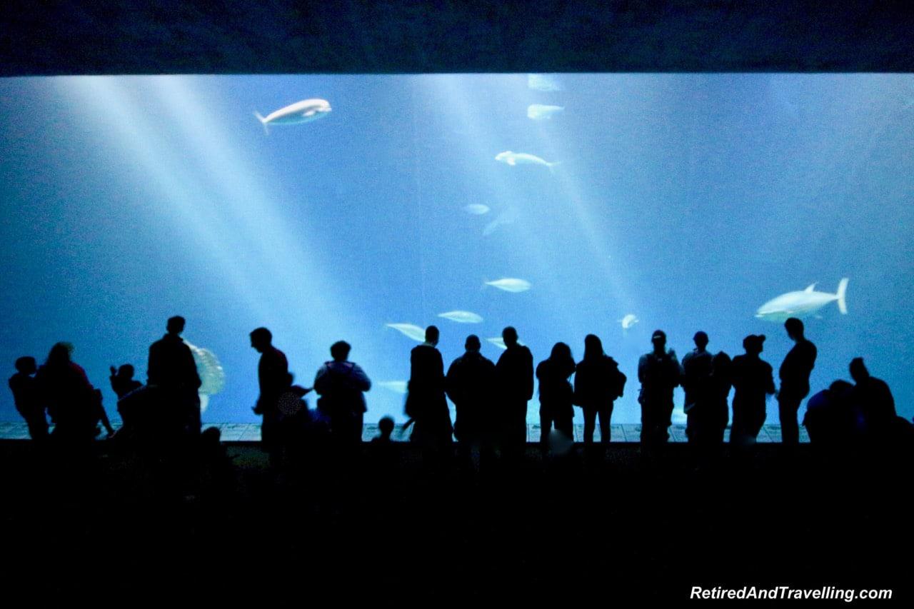 Monterey Bay Aquarium Open Sea Feeding - Under the Sea Views Of Monterey.jpg