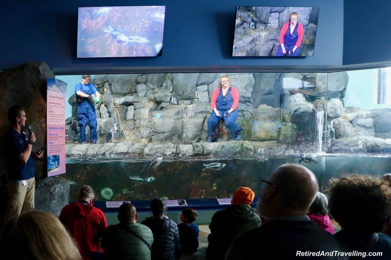 Monterey Bay Aquarium Penguin Feeding - Under the Sea Views Of Monterey.jpg