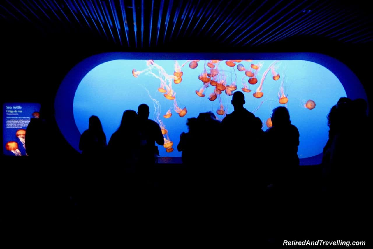Monterey Aquarium Jelly Fish - Road Trip Along The California Coast.jpg