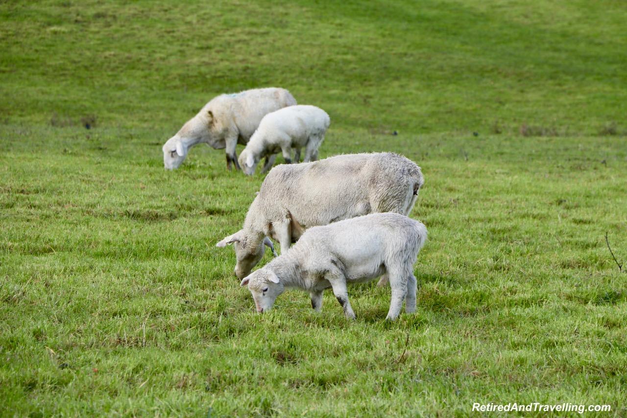 Sheep Keller Estates.jpg