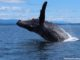 Wildlife And Whales On Vancouver Island.jpg