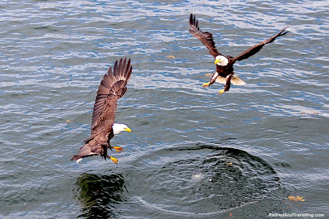 Alaska Eagles.jpg