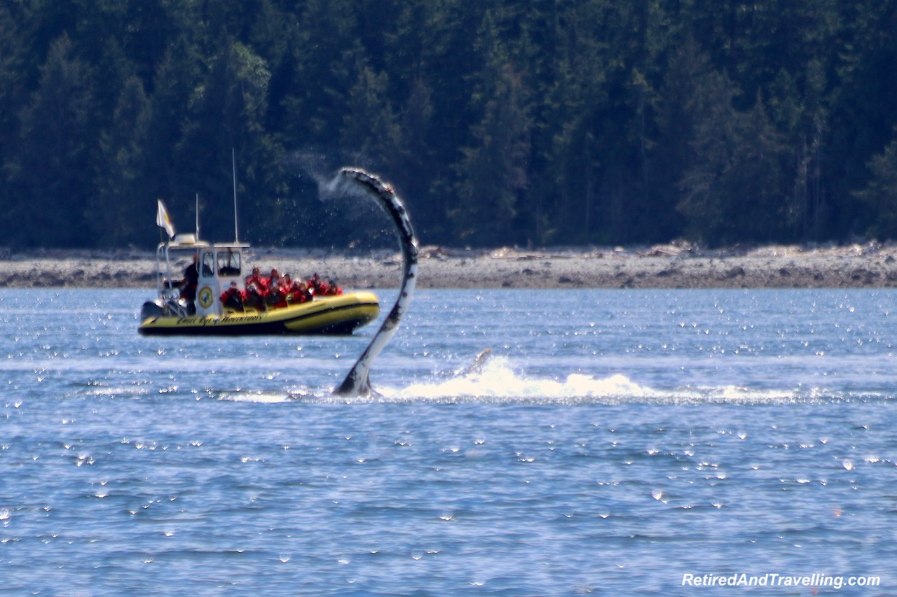 Fin Splash Humpback Whale Watching Adventure Quest Canada - Wildlife And Whales On Vancouver Island.jpg